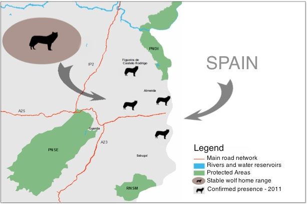 Iberian Wolf Distribution
