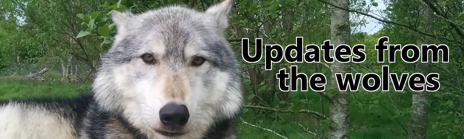 Updates from the wolves