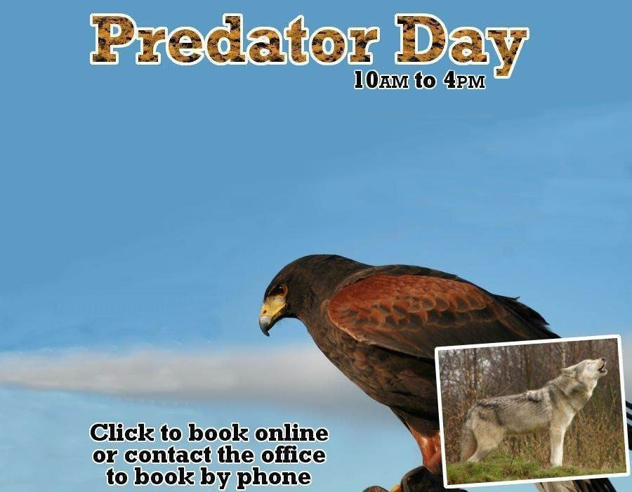 Predator Day