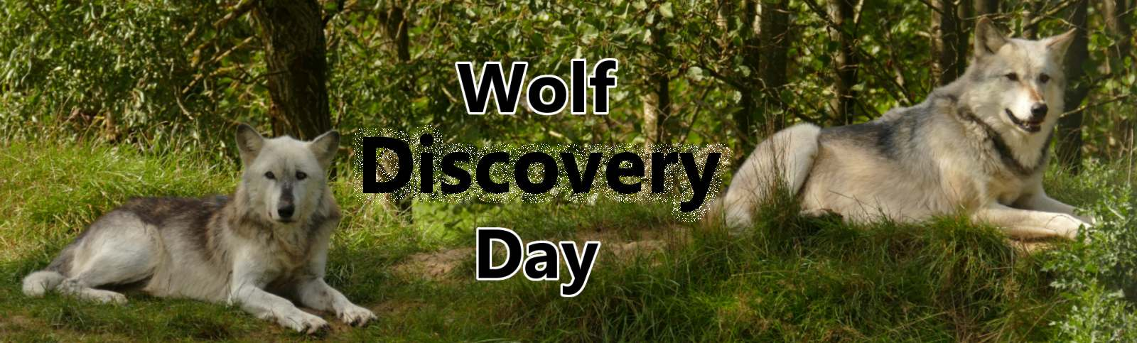 Wolf Discovery Day